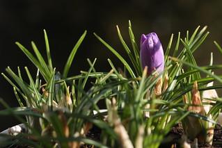 Spring Surprise :-)