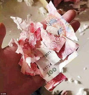 Dog chewed 100 yuan banknotes