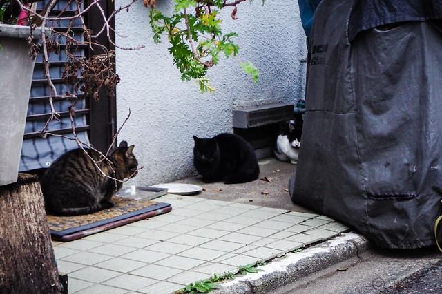 Today's Cat@2015-12-30