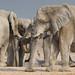 Etosha's white elephants  - 2 by me*voilà