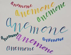 Day 6: anemone. I used my new markers and had some fun doubling up colors. #brushletterpracticechallenge #brushlettering #handlettering #brushpen #brushmarker