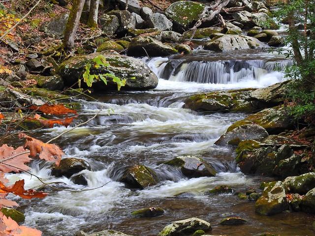 0276ex  P900  autumn flows
