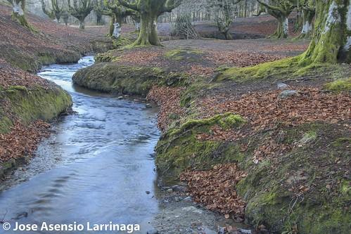 Parque Natural de Gorbeia  #DePaseoConLarri #Flickr -3054