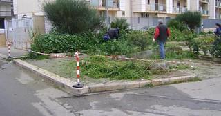 Gli interventi sulle aree verdi di Casamassima (2)
