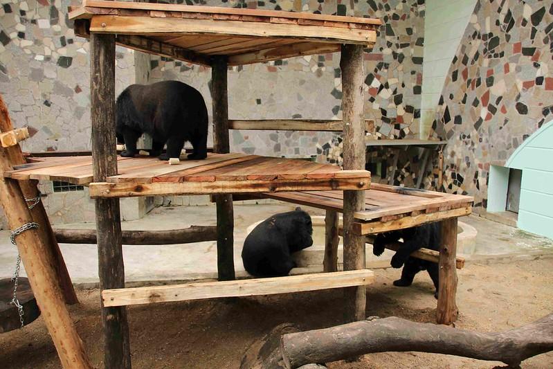 Hanoi zoo bear platform, April 2015