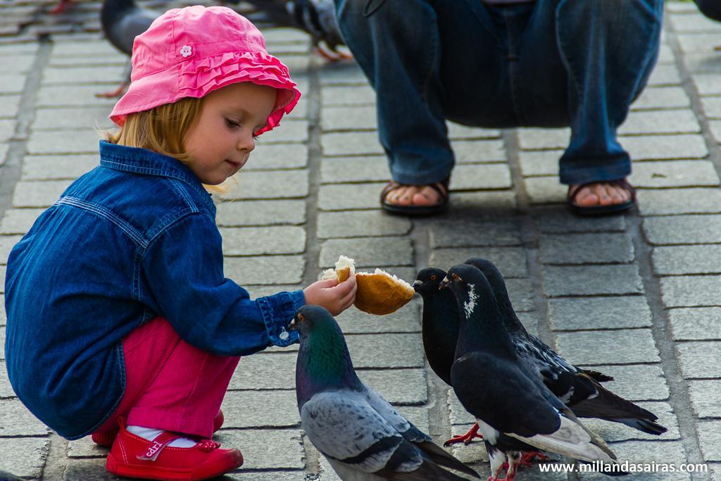 Dando de comer a las palomas en la Plaza del Mercado