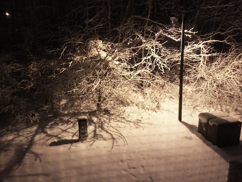 More Snow (February 25 2015)