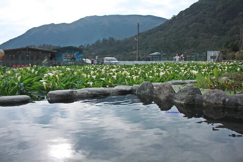 竹子湖採海芋-17度C隨拍 (24)