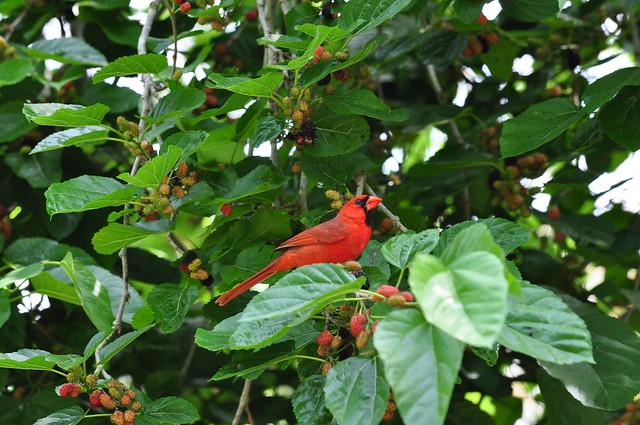 In the berries