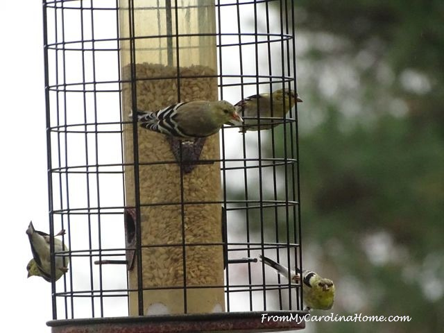 Goldfinches March 2016 1