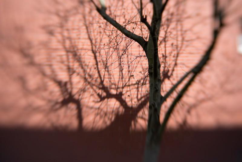 Evry Daily Photo - Evry Centre - Comme un arbre dans la ville