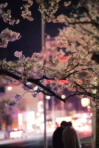 神戸製鋼所の桜 02