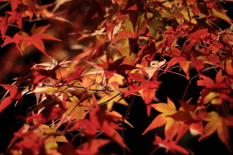 20141122-武奈ヶ岳&京都ライトアップ-0640.jpg