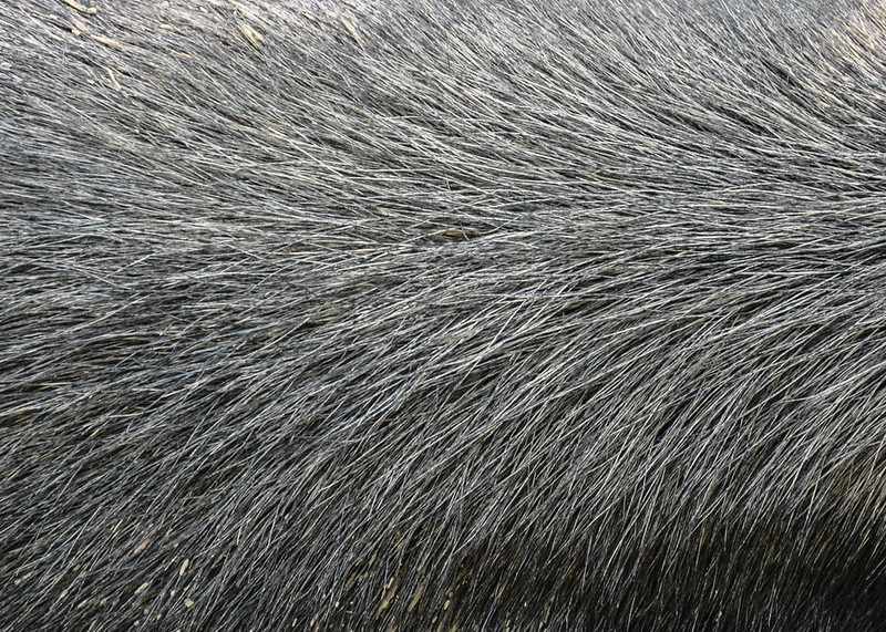 animal-fur-closeup-texturepalace-18