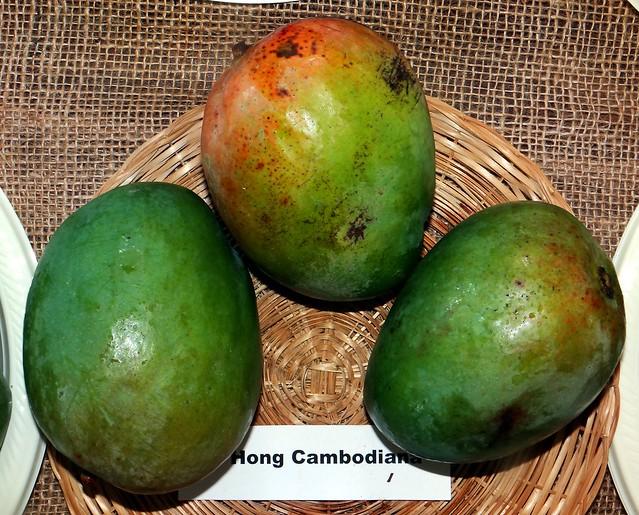 Mango  #323: HONC CAMBODIANA