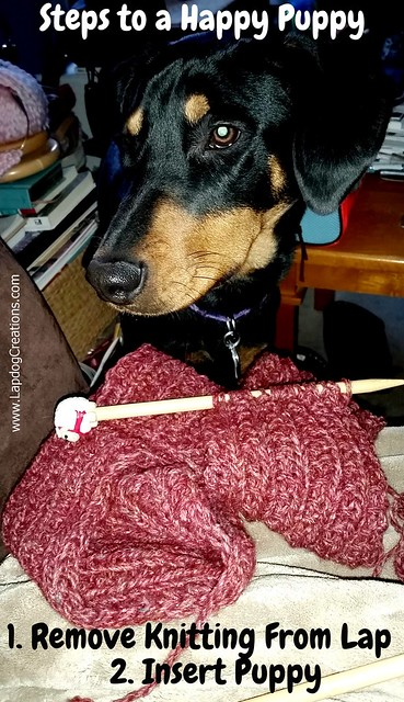 Doberman Puppy Wants to Sit in Mommy's Lap - Lapdog Creations