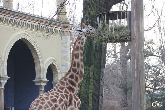 Kurzbesuch im Zoo 20.12.20156
