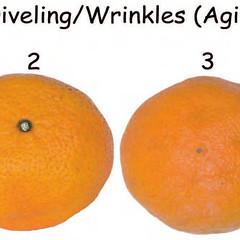 citrus-0364