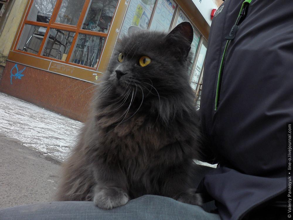 20161206_lutskcat_001