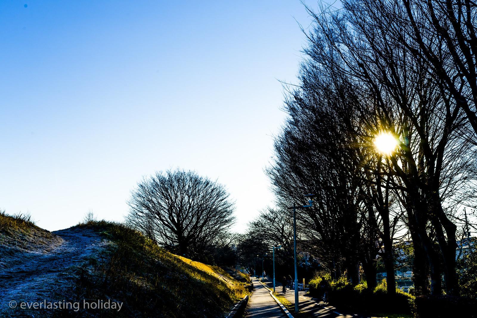 朝の自転車道(cycling road in the morning)
