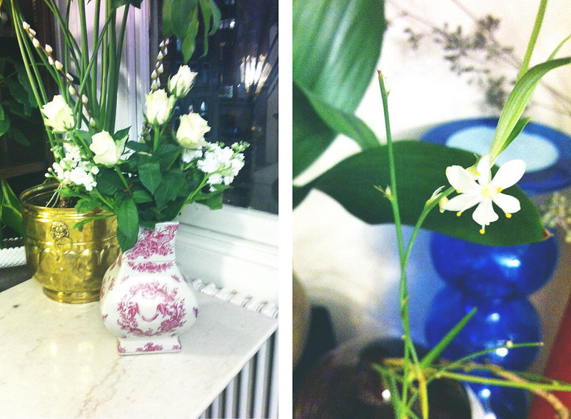 pink vase, white blooms