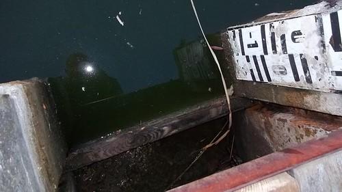 2015 - Výlov rybníku