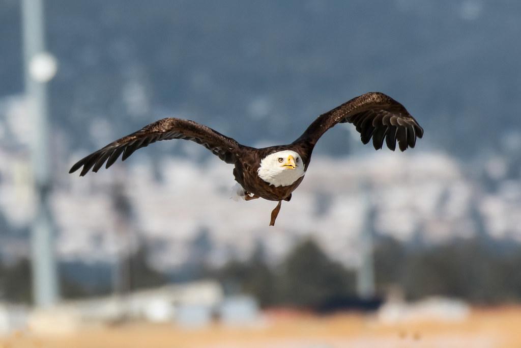 Presentación sobre la Observación de Aves en el American Corner, 26 de Junio, las 18:00hrs