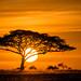 Sunrise on the Serengeti by tompost
