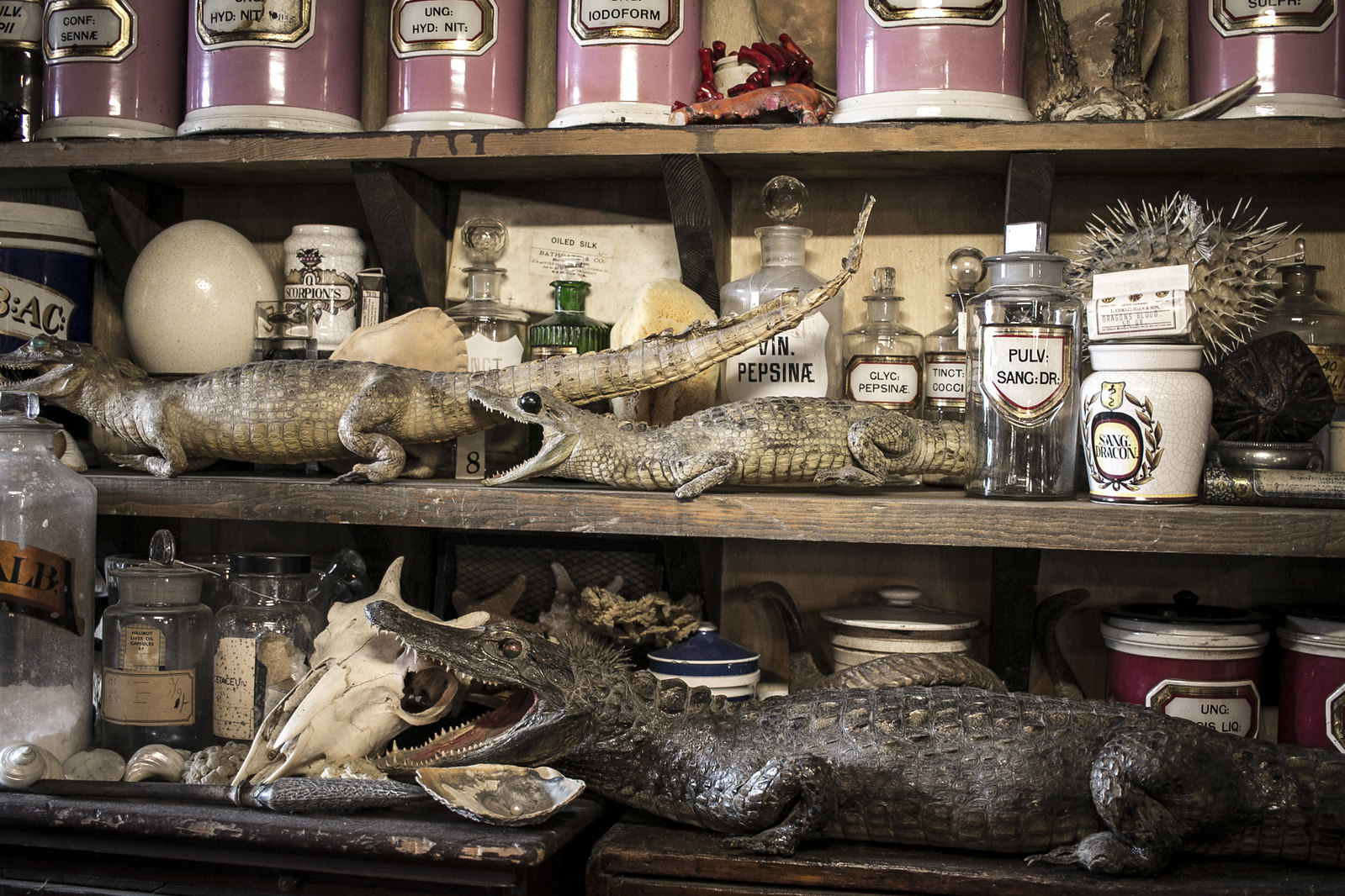 the old operating theatre, cabinet of curiosities, taxidermy