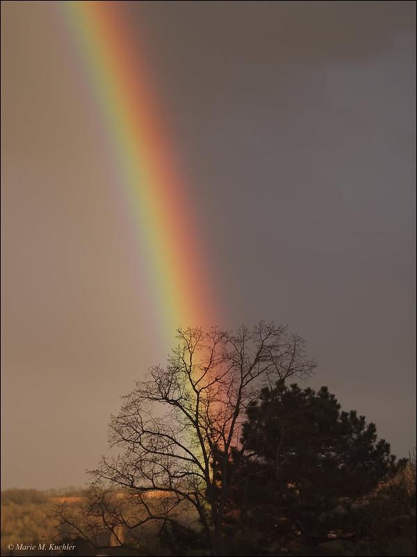 Rainbow  26499535756_21325730db_c