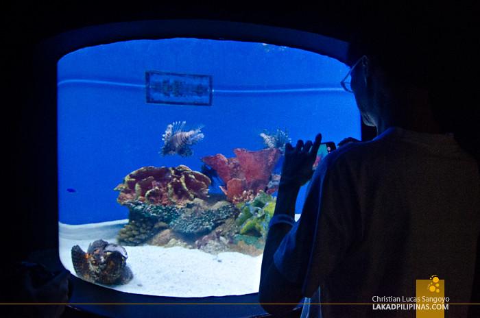 Manila Ocean Park Aquarium