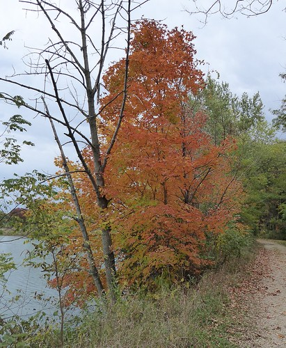 trees red orange plants lake fall nature water leaves pond flora path foliage trail loonlake silverspringsstatepark