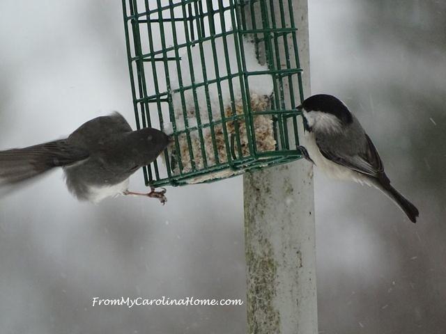 January 2016 Snow birds 6