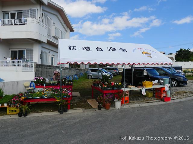 沖縄県北中城村のひまわり-64