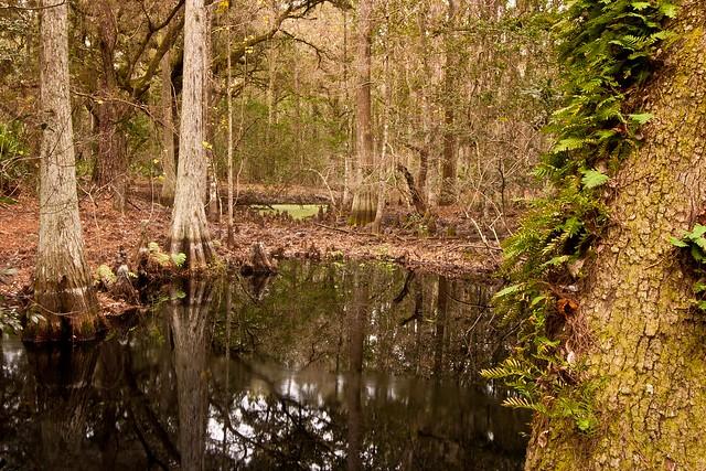 13:366 Swamp