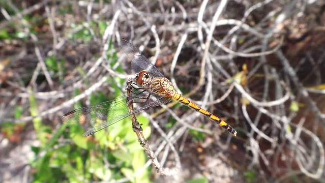 Dragon Fly 🐌🐛🐜🐝🐞