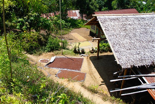 Semillas en Ternate