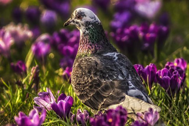 A dove in the garden of eden!