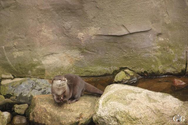 Zoo Bremerhaven 09.04.16 2.Teil85