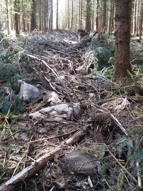Damage to Hemstone Rocks thanks to logging