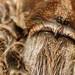 Tarantula close up of eyes by Allan Jones Photographer