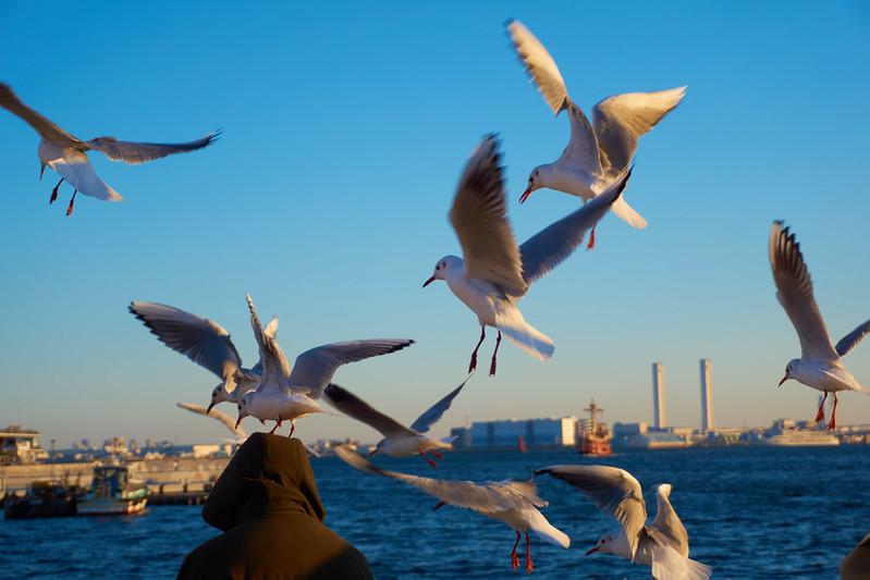 Yokohama Seagull - A6000