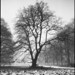 Old Beech by holtelars