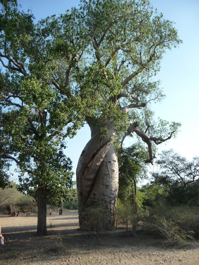 Baobabsamourex_ott_03
