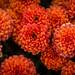 Orange Flowers 5