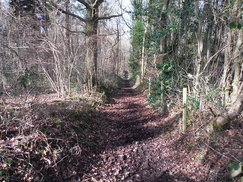 Path in Greyfield Wood, Beenham
