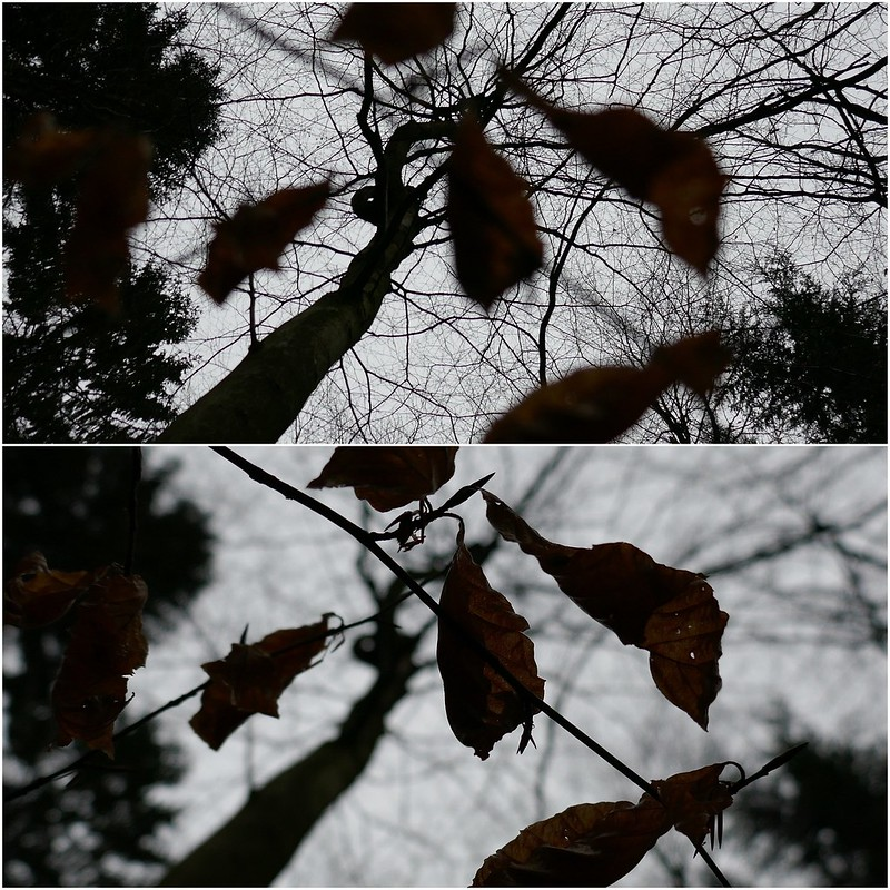 Trees and dry leaves in 4k post focus