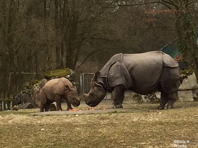 Muenchen_Ostern_2016_Tierpark_Hellabrunn_022
