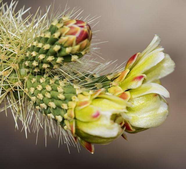 Cactus 18_7D2_300316