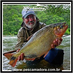 Bela piracanjuba fisgada pelo Ruy Varella.  #pescaamadora #pesqueesolte #baitcast #pescaesportiva #sportfishing #fishing #flyfishing #fish #bassfishing #bass #angler #river #rioparana #rioguapore #riomanso #catchandrelease #fly #lures #fishinglures #urugu